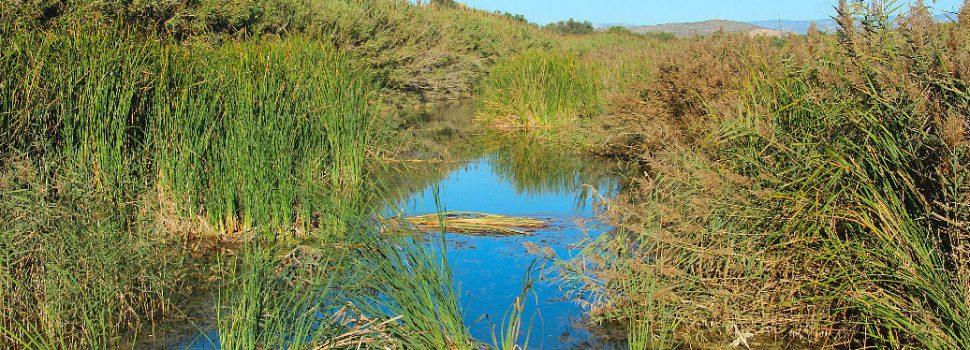 Ben Vist: Aigua Oliva