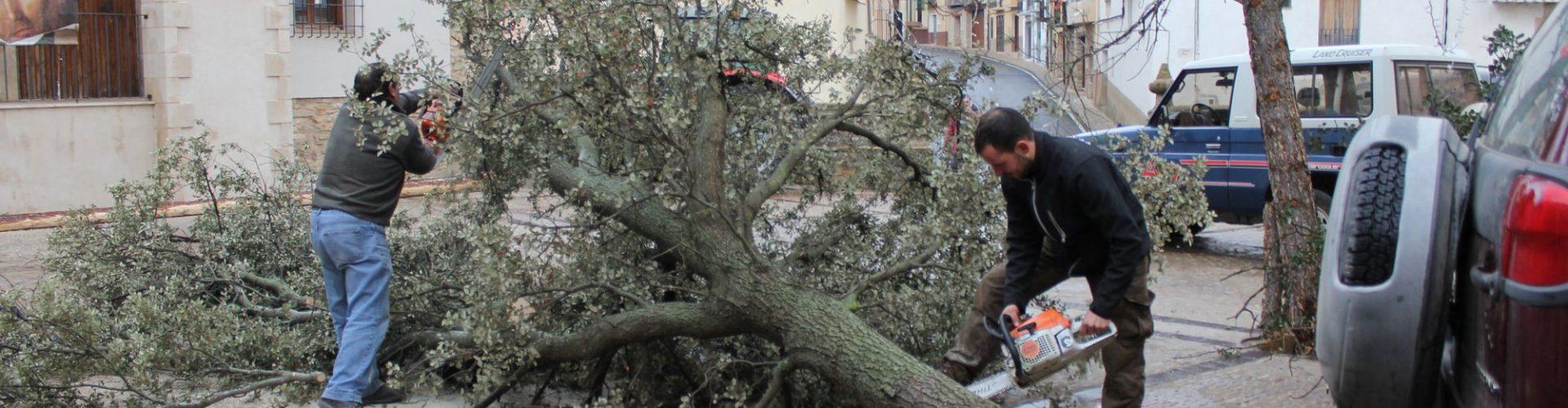 Castellfort inicia els preparatius de Sant Antoni