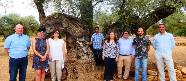 Pregunta al Parlament Europeu sobre les oliveres mil·lenàries del Territori Sénia