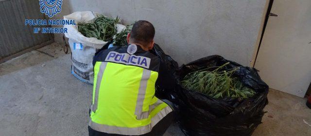 Desarticulada una organización de tráfico de estupefacientes en el sur de Tarragona
