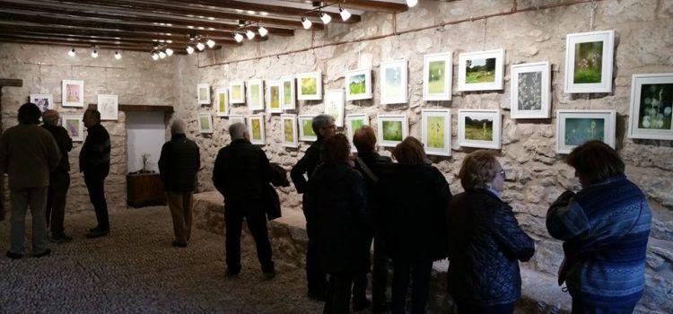 Exposició de fotos d'orquídies a Vallibona