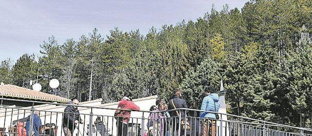 La procesionaria invade un pinar próximo a la guardería de Morella