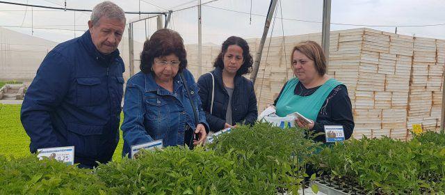 Toda la oferta para cultivos urbanos en el semillero Benihort de Benicarló