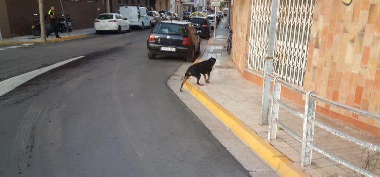 Dos rottweilers matan a un gato y dañan un turismo en Benicarló