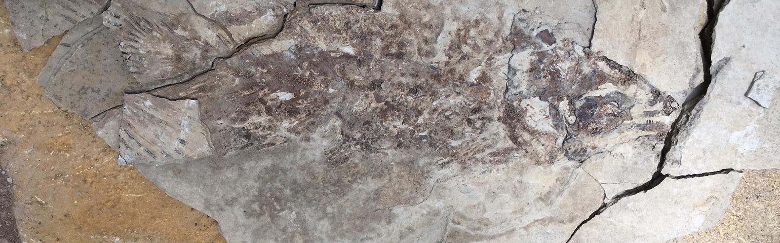 La Asociación Paleontológica de Vinaròs participó en excavaciones en Las Hoyas