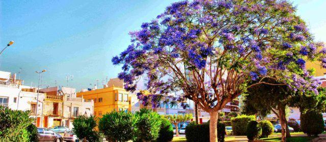 Ben Vist: Plaça Primer de Maig de Vinaròs