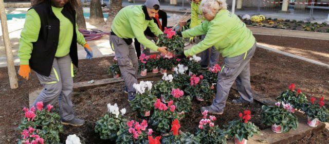 El taller d'ocupació ha començat els treballs de jardineria a la plaça de la C.Valenciana de Benicarló