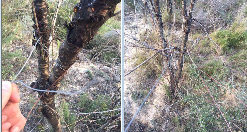 Cabanes condemna la col·locació de filferros per fer mal a ciclistes i motoristes a la muntanya