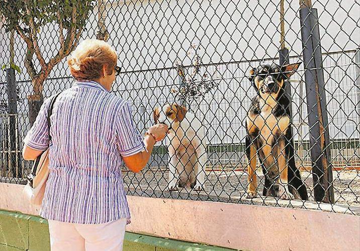 Vinaròs quiere alcanzar el sacrificio cero de animales