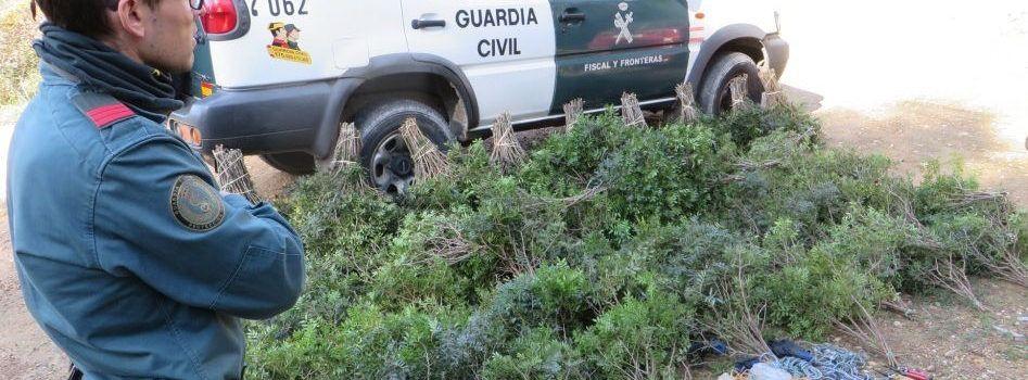 La Guardia Civil incauta en Tortosa más de 100 kilos de lentisco recolectado sin autorización