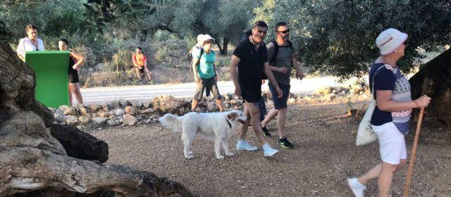 Canet lo Roig estrena cicle de rutes turístiques amb les oliveres com a protagonistes