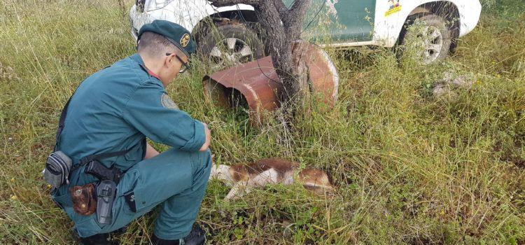 La Guardia Civil investiga a un vecino de Tortosa por un supuesto delito de maltrato animal