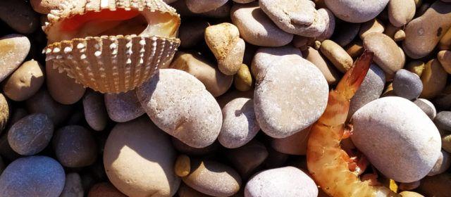 A Vinaròs, la mar arrossega fauna marina fins a la platja