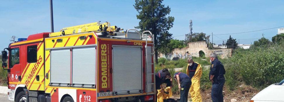 Policia local Vinaròs: retirada d'un eixam, intent de robar cablejat i regal de dolços musulmans