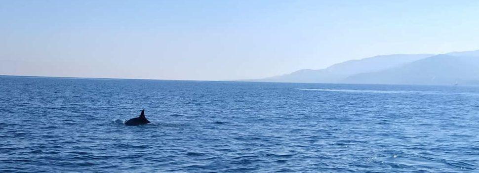 Avistamientos de ballenas rorcuales frente a la costa del Baix Maestrat
