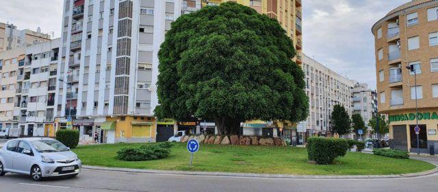 """Diez años de un emblemático árbol benicarlando en Vinaròs: """"Bertomeu"""""""