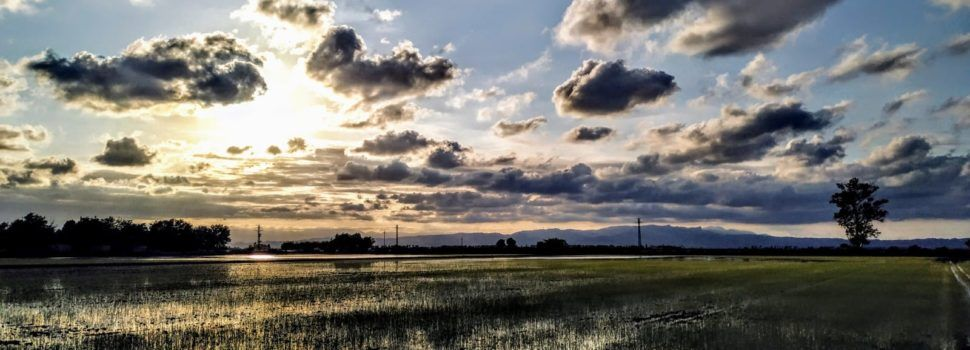 Fotos: Els quadres de l'arròs comencen a verdejar al Delta de l'Ebre