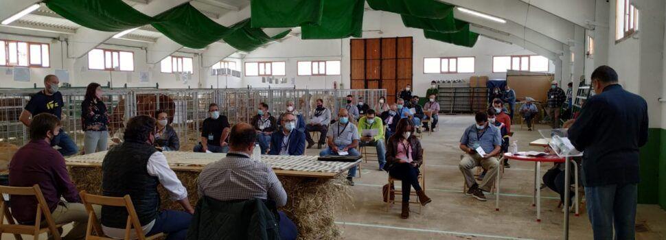 El 90% del ganado vendido en la subasta de Cantavieja