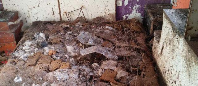 Desparasitada la casa de Vinaròs hallada destrozada, tras dejarla su arrendataria