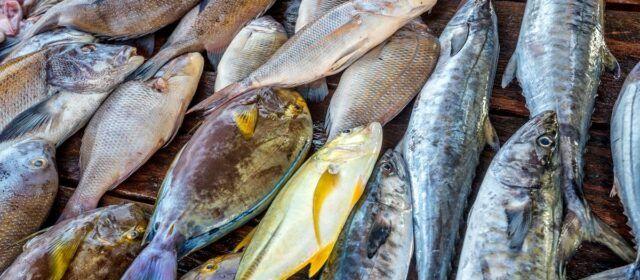 COINCOPESCA sol·licita que es mantinga el tradicional ranxo dels pescadors