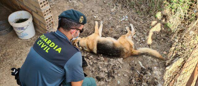 La Guardia Civil investiga un presunto delito de maltrato animal en l'Aldea