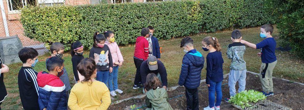 Vídeo i fotos: Reviscolen els horts escolars a Vinaròs