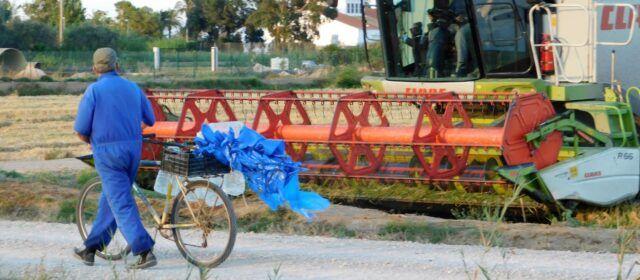 Fotos: Temps de sega al Delta de l'Ebre