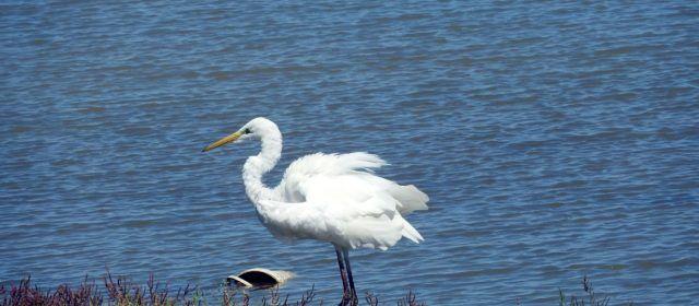 Vídeo i fotos: Agró blanc al Delta de l'Ebre