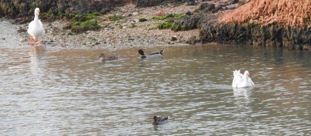 Fotos i vídeo: La fauna del Cervol a Vinaròs