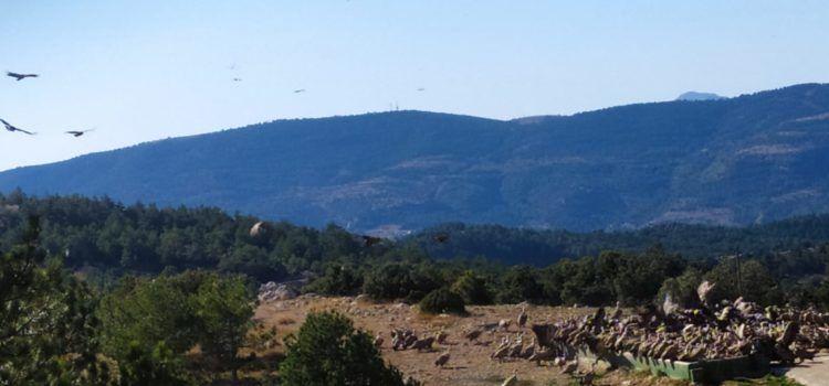 El Parc Natural de la Tinença celebrà a Vallibona el Dia de les Aus Migratòries