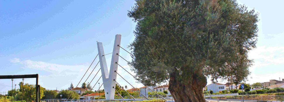 Ben Vist: Parc de les Catalinetes