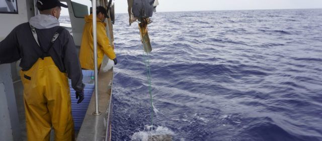 Aprovat el Pla de Gestió de la Pesca Artesanal del Polp amb Caduf on hi ha adscrites 6 embarcacions de Benicarló i Vinaròs