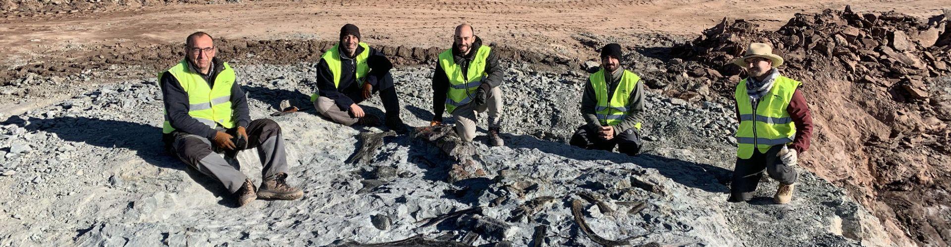 Noves restes de dinosaures ornitòpodes a les mines d'argila de Morella