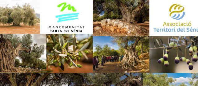 6.358 oliveres mil·lenàries catalogades al territori Sénia, sent Ulldecona i Canet on n'hi ha més