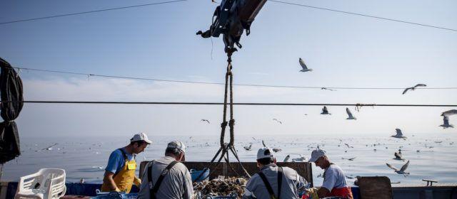 La lonja de Vinaròs capturó 1.140 toneladas de 'Peix de Llotja' en 2019 y generó un volumen de negocio de 4,1 millones de euros