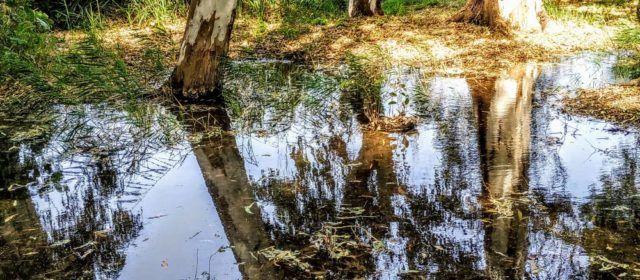 Fotos: Ullals de Baltasar, al Delta de l'Ebre