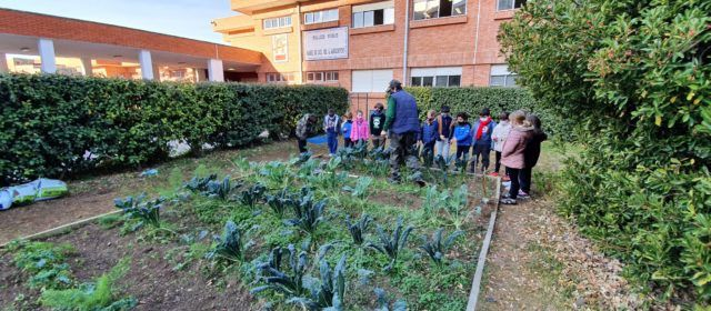 Els horts d'Ecoescoles donen fruit