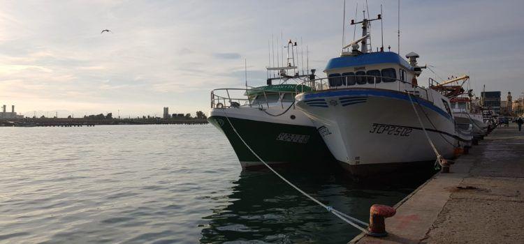 Les tres barques de cércol de Vinaròs tornen a faenar després de l'aturada biològica