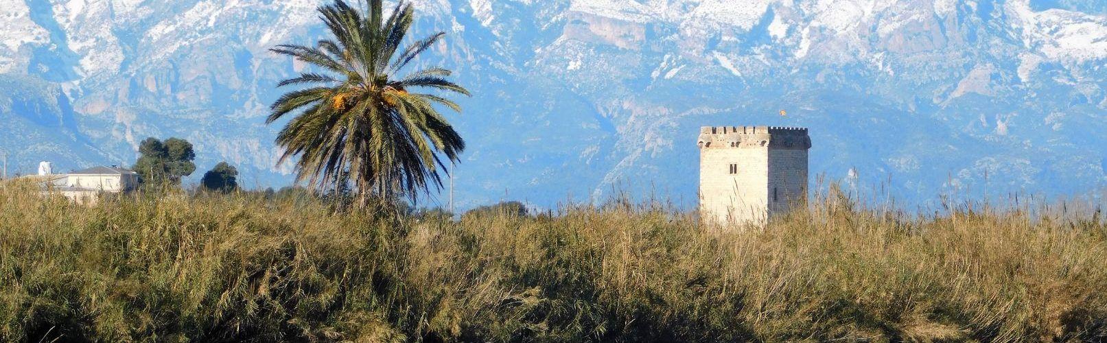 Fotos: la neu vista des del Montsià i Baix Ebre
