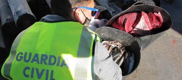 Dos investigados por pescar atún rojo en época de veda, entregado tras incautarlo a Cáritas Diocesana de L'Aldea