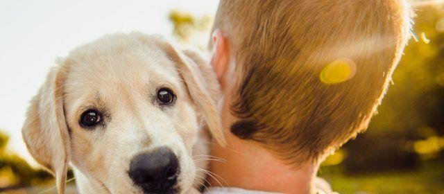 L'Ajuntament d'Alcanar crea la Regidoria de benestar animal