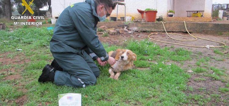 La Guardia Civil rescata a cuatro perros abandonados por sus dueños en una finca de Masdenverge