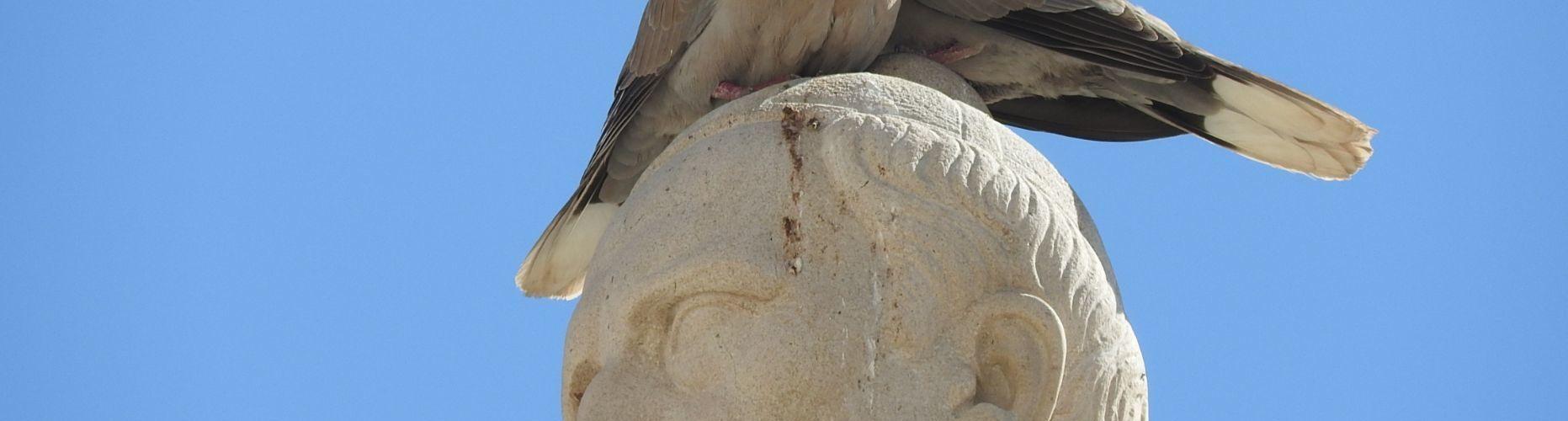 """Fotos: L'estàtua de Costa i Borràs, """"camp d'aterratge"""" per a tòrtores"""