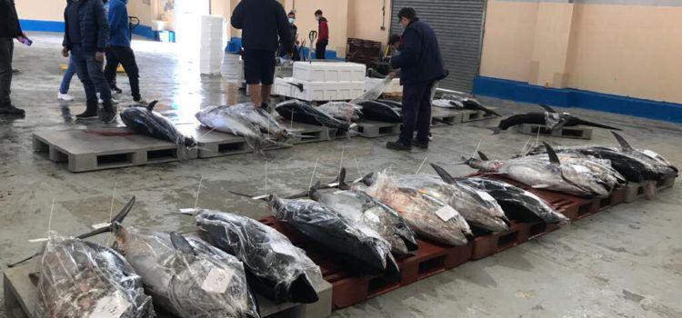 COINCOPESCA exerceix d'interlocutor de les embarcacions de pesca d'arts menors amb quota de tonyina roja de la Comunitat Valenciana