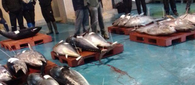 Fotos: Subhasta de 17 tonyines a la llotja de Vinaròs