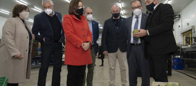 La Diputació subvenciona amb 57.000 euros a la DOP Carxofa de Benicarló per a canviar els plançons afectats pel fong verticillium