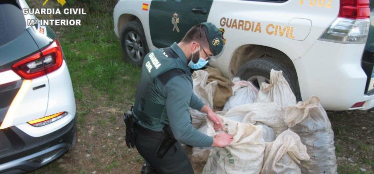 La Guardia Civil investiga a dos personas por el robo de algarrobas en Godall