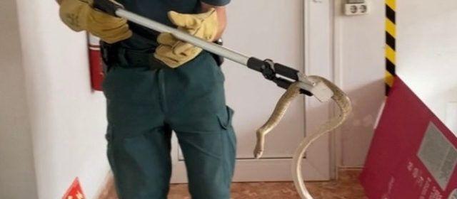 La Guardia Civil rescata una culebra en una oficina de la Raval de Crist de Roquetes