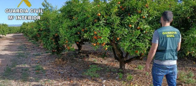 La Guardia Civil detiene a dos personas e investiga a otra por la sustracción de 35.000 kg de naranjas enVinaròs, Sant Jordi y Traiguera