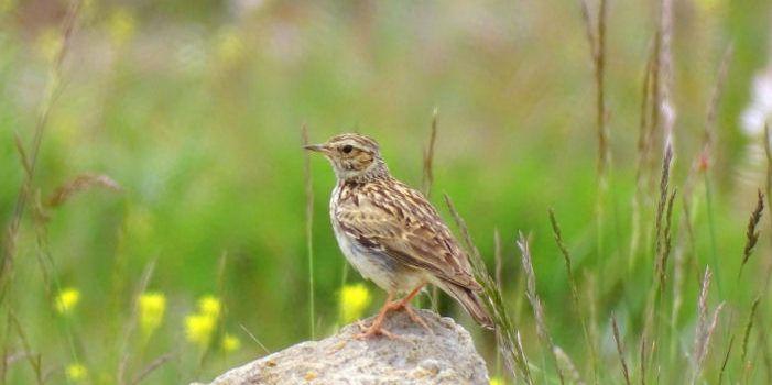 IX Marató ornitològica a la comarca d'Els Ports